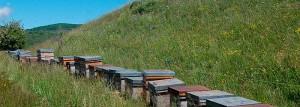 entorno natural apicultura ecológica