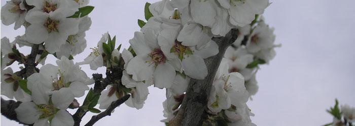 abejas-y-polinizacion