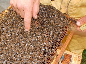 procesado de miel ecologica