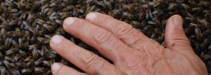 veneno-de-abeja
