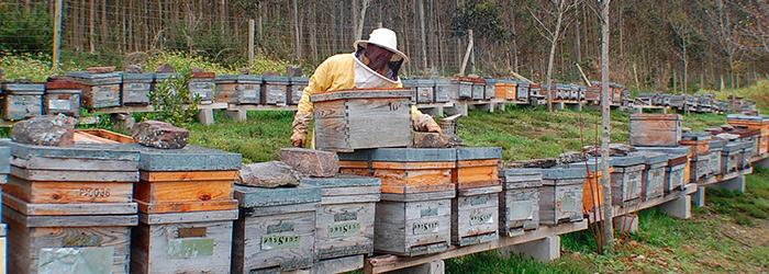 colmenas de apicultura ecologica