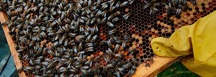 Panal de miel ecológica